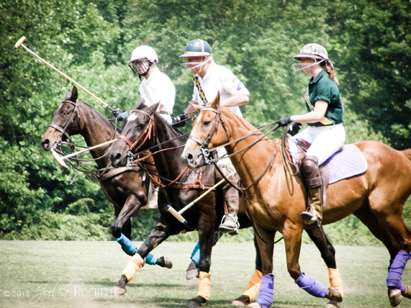 Polo Ponies 3