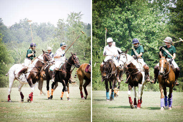 Polo Ponies 7