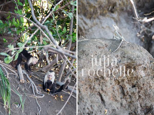 white faced capuchin Costa Rica